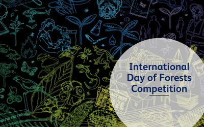 International Day of Forests Competition