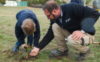 Forest Focus – Schools Tree Day